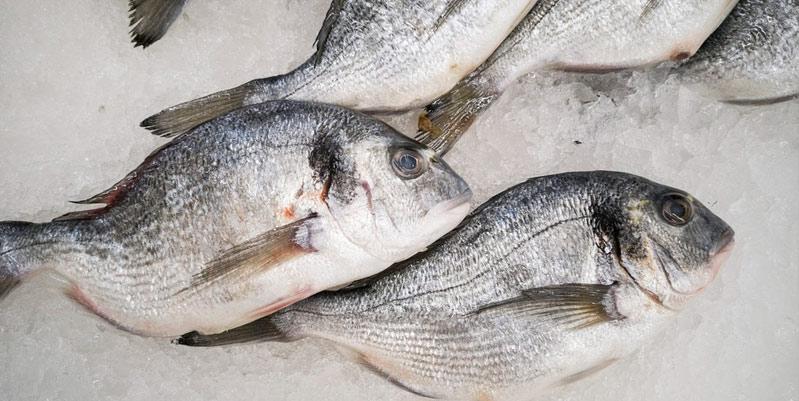 como congelar pescado fresco