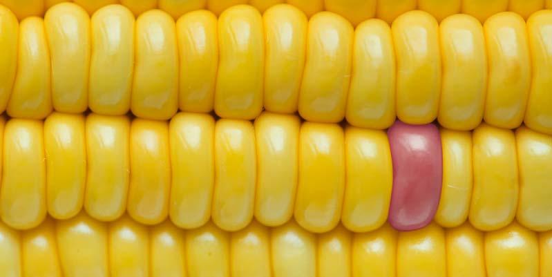 propiedades de las palomitas de maiz