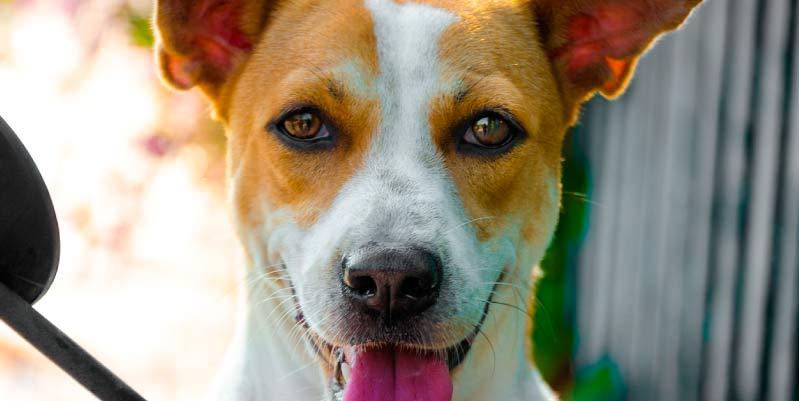 perros para terapia psicologica