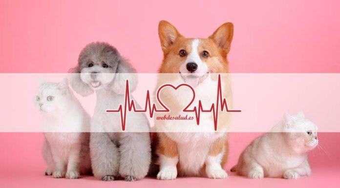 musicoterapia para perros